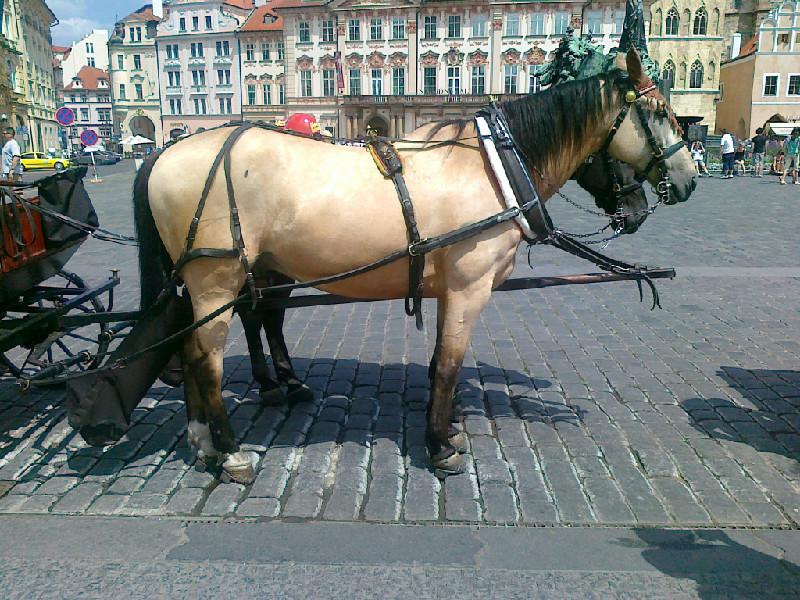Лошади סוסים