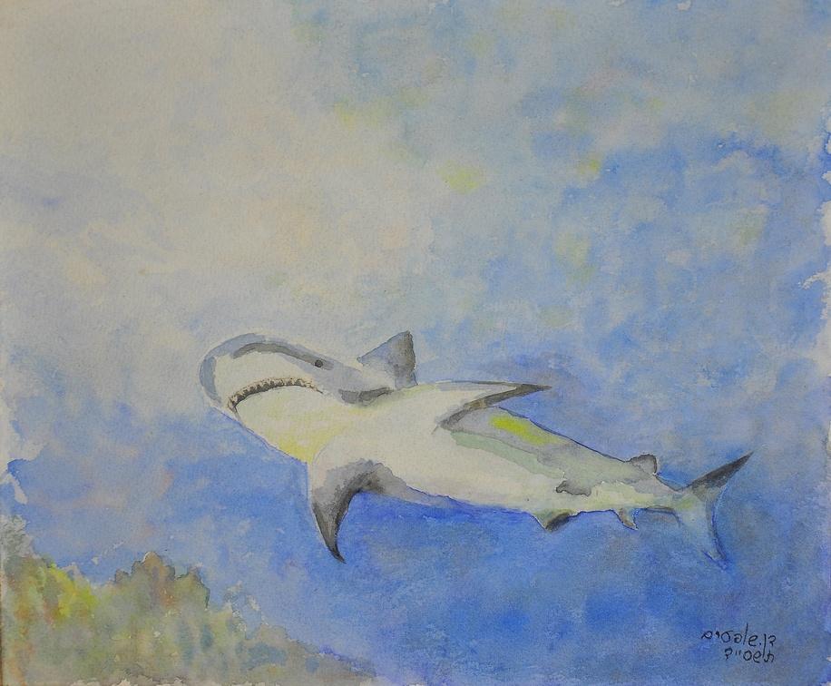 Акула כריש