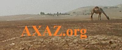 axaz.org